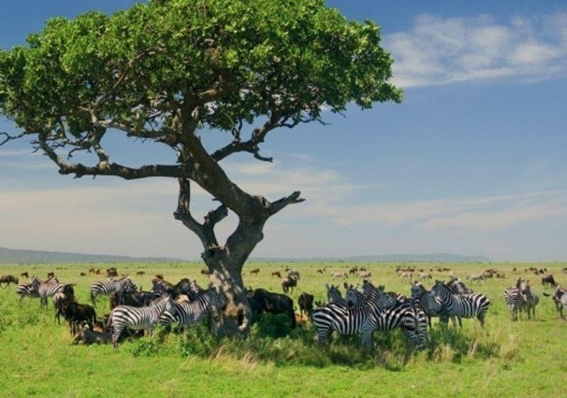 Tanzania Classic Sky Safari