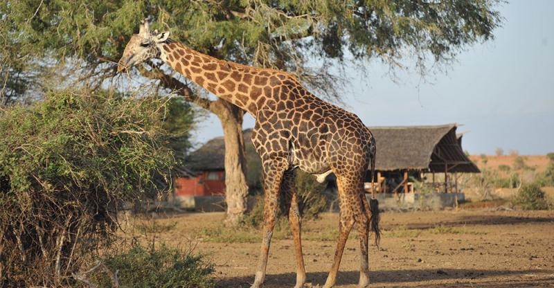 Kenya Classic Escorted Tour