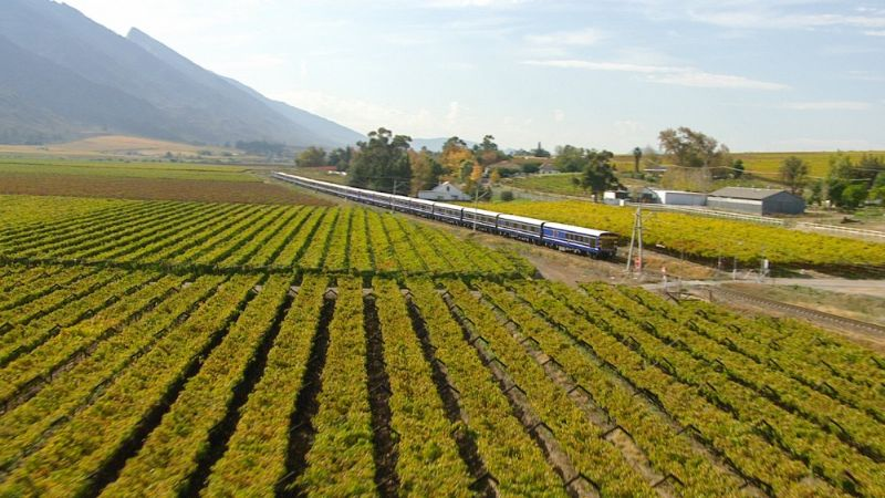 blue train Vineyard