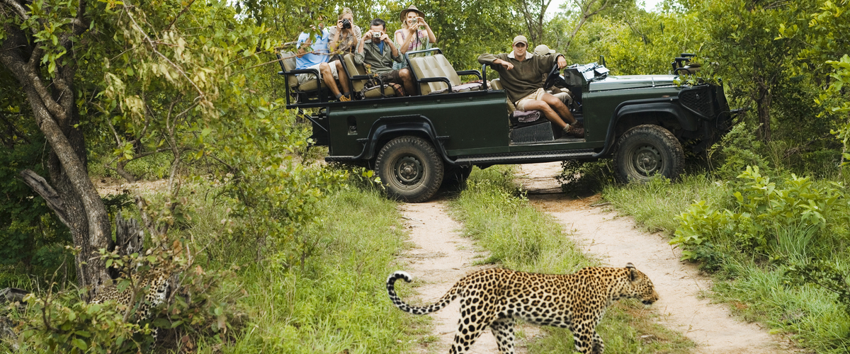 Safari holidays from Belfast and Dublin