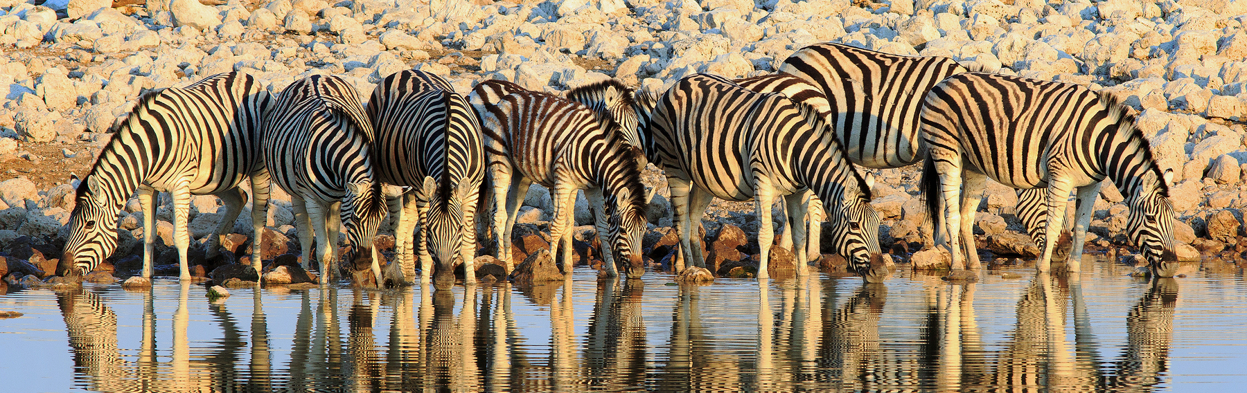 African watering hole