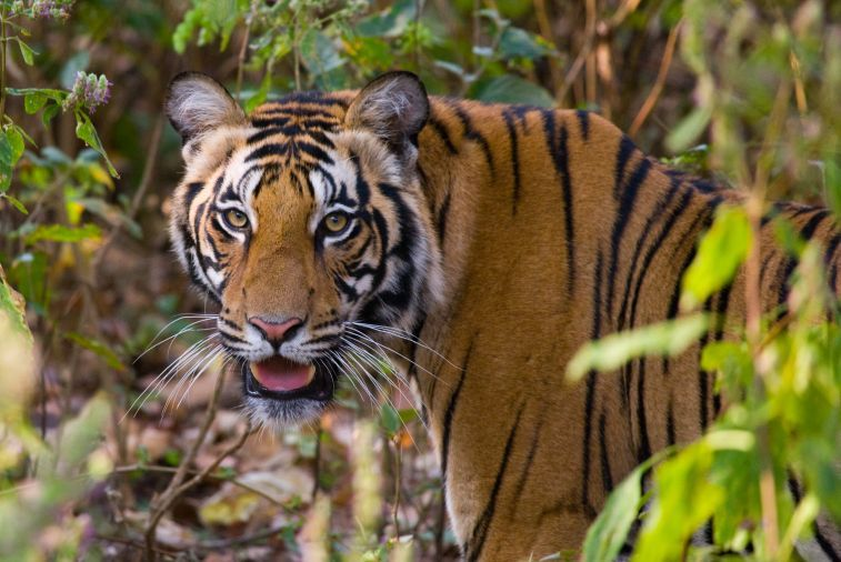 Northern India - Temples & Tigers
